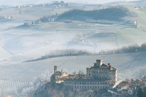Consorzio Italia del Vino